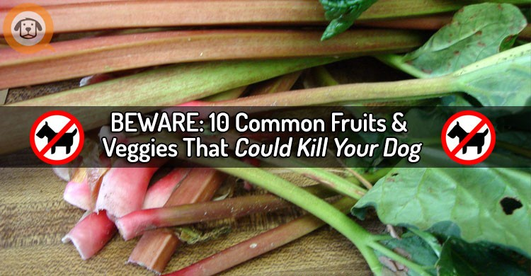 10 Common Fruits and Vegetables That Can Hurt or Kill Your Dog – BEWARE!