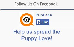 Like PupFans on Facebook