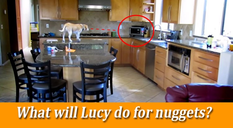 Genius Beagle Scores Hot Nuggets