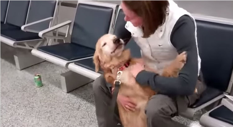 Heartwarming: 8 Doggies Welcome Their Soldiers Home