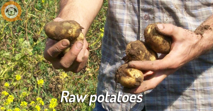 raw green potatoes