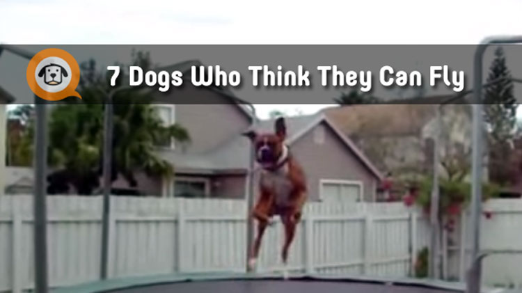 7 Dogs Who Know How To Bounce