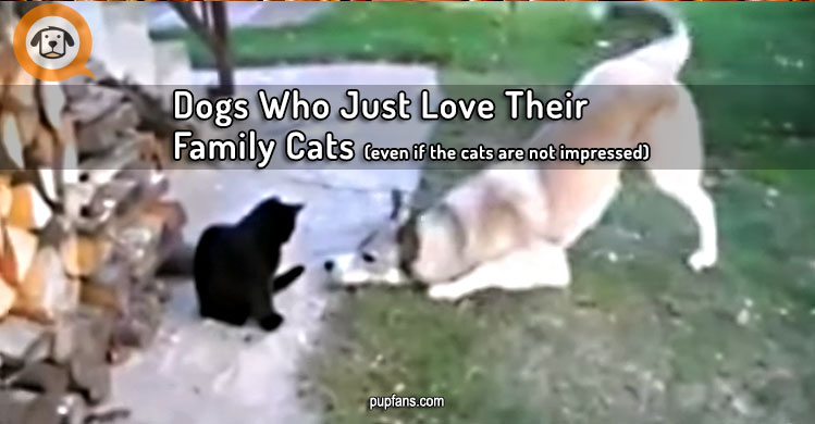 Dogs Who Just Love Their Family Cats