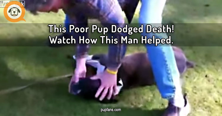 This Poor Pup Dodged Death Thanks to This Man's Quick Actions