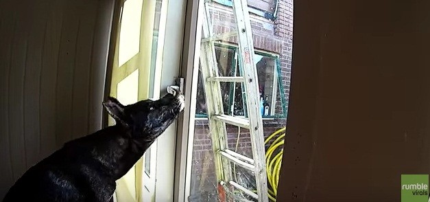Watch as Sneaky Dog Manages to Escape the House