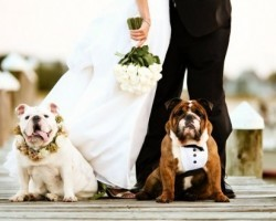 Getting Your Pooch Involved in Your Wedding