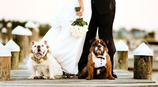dogs a part of a wedding