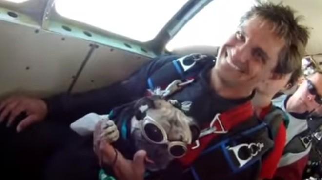 pug skydiving
