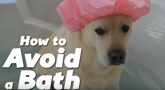 dog avoiding a bath