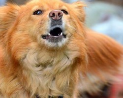 Is Your Pooch Barking During Walks? Try These Tips to Stop Her From Barking