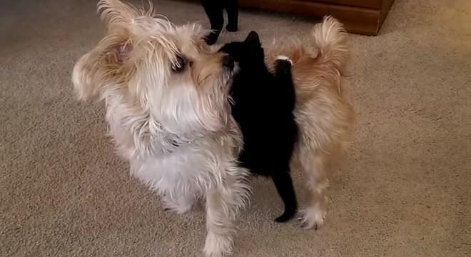 kitten wants a ride on dog