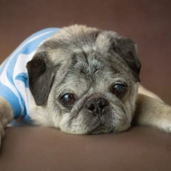 Determining a Dog's Age…. We've Been Calculating it Wrong This Whole Time!