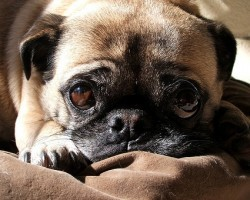 Retraining Your Pooch to Sleep in His Bed and NOT Yours