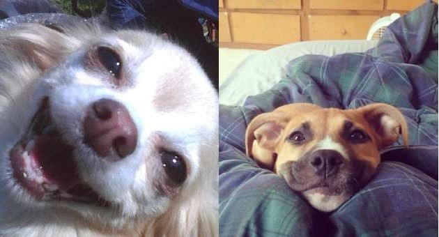 smiling doggies