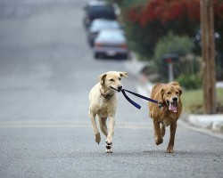 Why Having Two Doggies Is Better Than One!