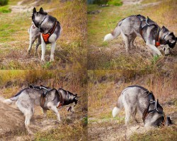 Having a Hard Time Figuring Out Your Dog's Behaviors? Learn More About the Following Canine Instincts