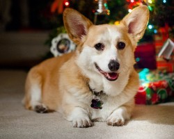 Want Your Furry Best Friend to Enjoy The Holidays? Then Follow These Tips…