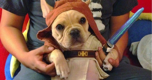 Bulldog Jedi
