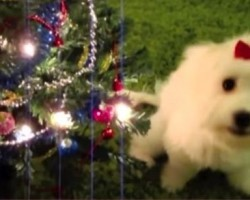"""[VIDEO] Watch These Funny Animals Sing """"12 Days of Christmas"""" – The Pooch at 03:15 is a Riot!"""