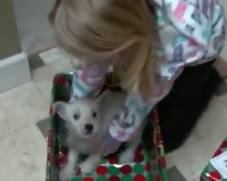 [VIDEO] Surprise Christmas Puppies Video Compilation – SO Merry and Bright!