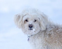 See an Abandoned Dog Out in the Cold? Here's What to Do to Save His Life