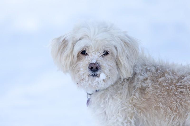 cold stray dog