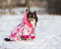 How to Properly Care for Your Doggy During the Winter
