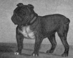 Woah! Check out These 6 Extinct Dog Breeds You Didn't Even Know Once Existed
