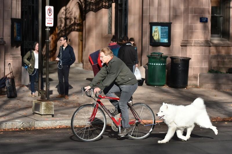 bike rider with dog
