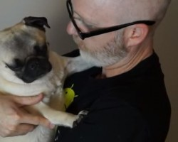 Pug vs Dad Kisses – Watch and See Who Wins!