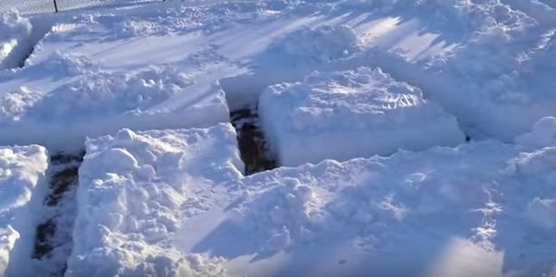 dog snow maze