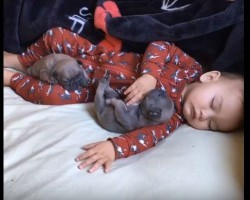 Baby Stretches and Rolls in a Bed Full of Pug Puppies = The Most Adorable Video Yet!