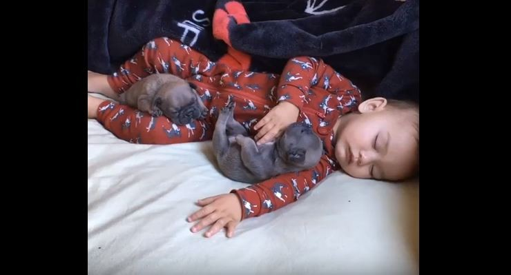 baby and pug puppies