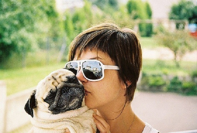 owner kissing pug