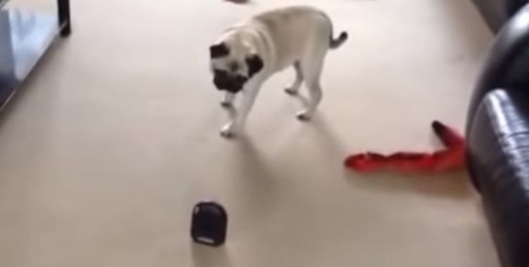 pug and fart machine