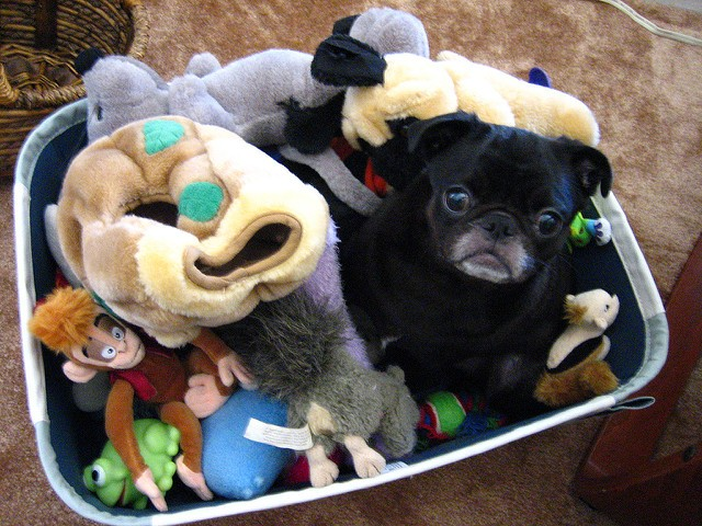 pug and toys