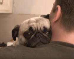(VIDEO) This Dad Asks His Pug for a Hug. Keep Your Eyes on Her Head to See How She Responds.