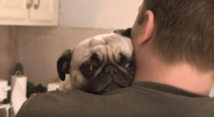 pug giving dad a hug