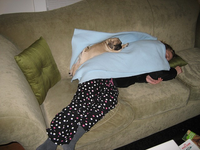 pug sleeping on a person