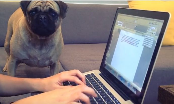 pug study buddy