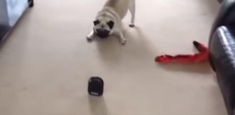 pug's attack move