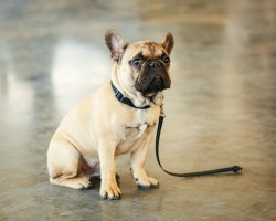 Why Do We Train a Dog to Sit and is it Really That Relevant?