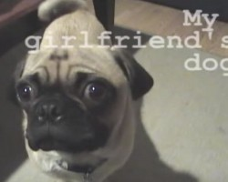 (VIDEO) This Man's Girlfriend Did a Prank With His Dog. How He Responds With His Girlfriend's Pug Will Shock You!
