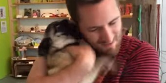 (Video) Pug Stays at a Doggy Hotel for 24 Hours. When her Parents Pick Her Up? I Can't Believe Her Reaction!