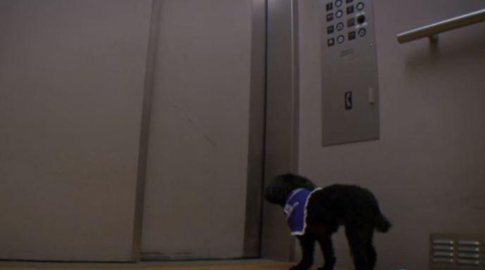 dog rides elevators