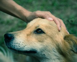 This Study Reveals Intriguing Information as to Where a Dog Does and Doesn't Like to be Pet