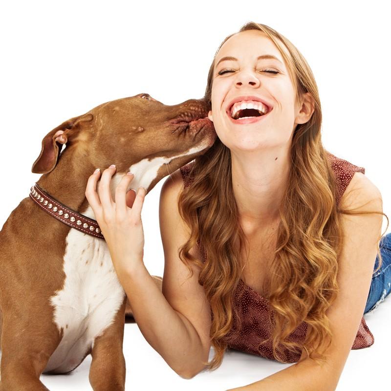 pit bull kissing girl