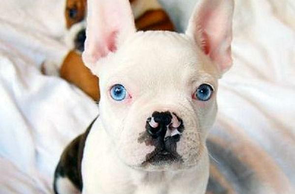 5 French Bulldog Mi You Ve Never