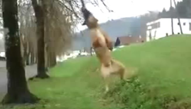 dog swinging from a tree