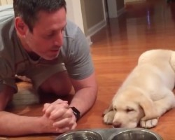(VIDEO) 3-Month-Old Lab Puppy Always Prays Before He Eats. How Dad Shows Him? Heavenly!